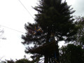 canopy-(31)